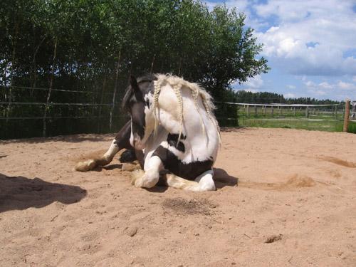 kolik pferd anzeichen